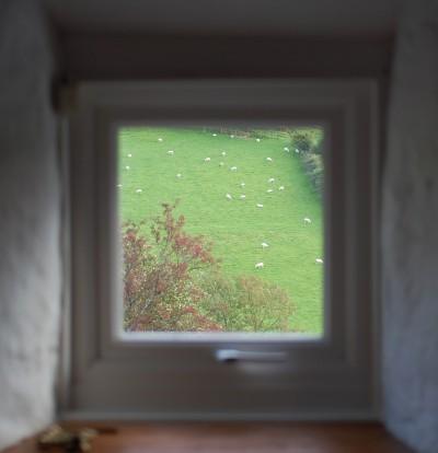 窓から羊.jpg
