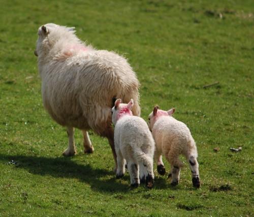 羊の足1.jpg